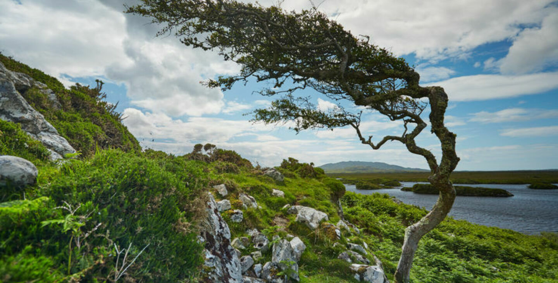 Connemara-New-Image
