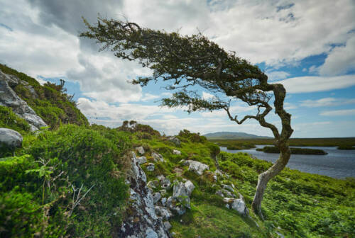 Connemara-New-Image
